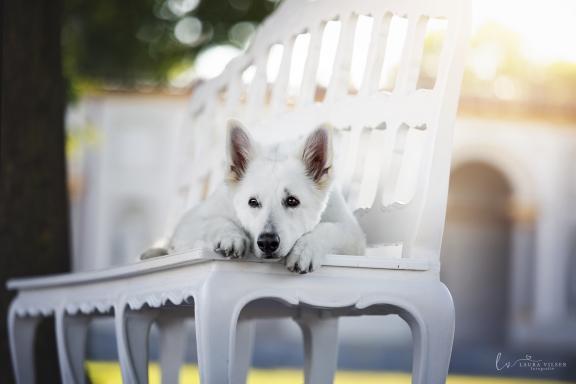 Tierverhaltenstherapie - Tierärztlichen Praxis für Tierpsychologie in München