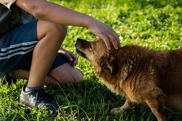 Hund hat Angst vor Kindern