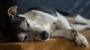 Alter Hund schläft viel