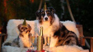Angst vor Geräuschen und Silvester bei Hunden