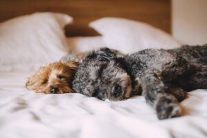 natürliche Mittel für Hunde an Silvester
